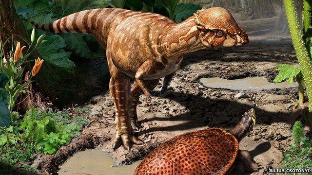 Ancient bone-headed dinosaur found