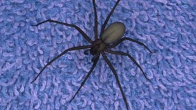 Scientists raise hope of vaccine against spider bites