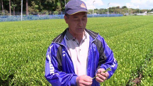 A tea farmer from Shizuoka inspects a leaf