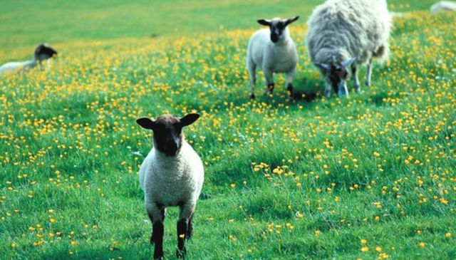 Vaccine for Schmallenberg virus 'available this summer'