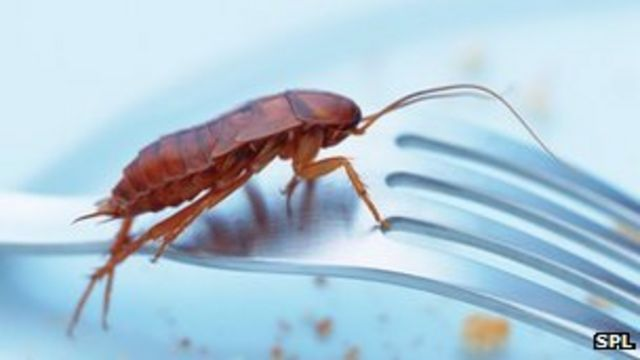 Cockroaches lose their 'sweet tooth' to evade traps