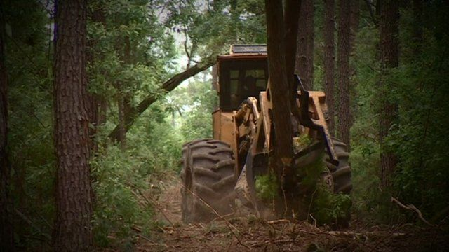 Tractor chopping down trees