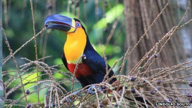 Brazil rainforest deforestation leads to seed shrinkage