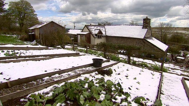 Snow on a vegetable patch