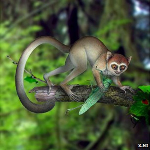Tiny Chinese Archicebus fossil is oldest primate yet found
