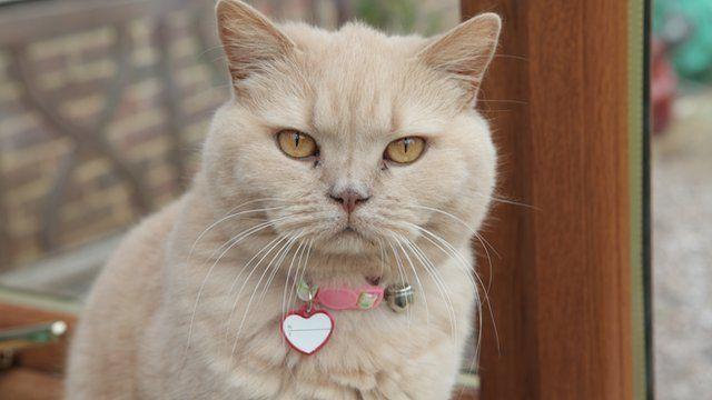 Rosie the cat