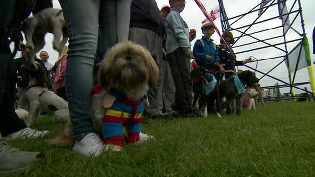 Dogs at the start line