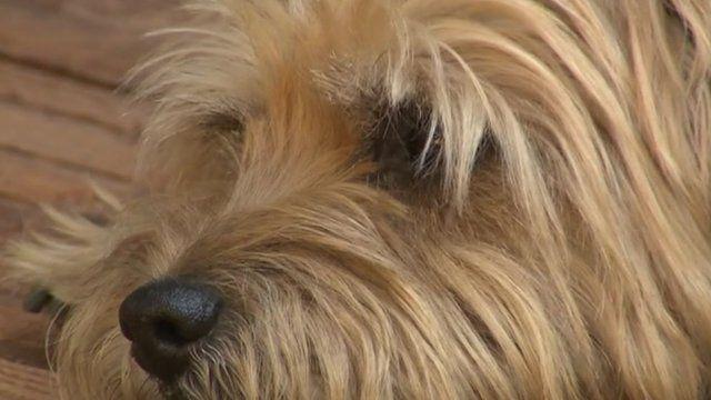 Rehomed dog Laddie
