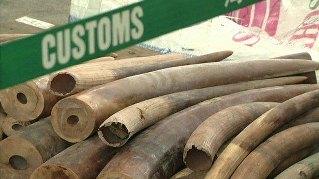 Illegal ivory seized in Hong Kong