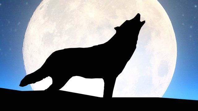 An image of an howling wolf