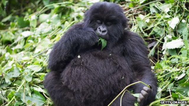 'Oil threat' to DR Congo's Virunga National Park