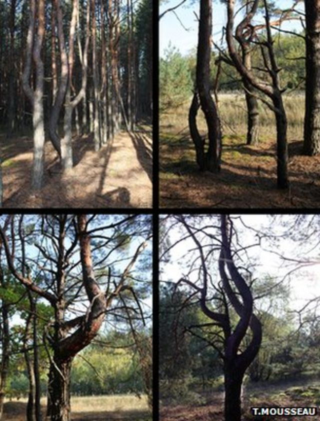 Chernobyl's legacy recorded in trees