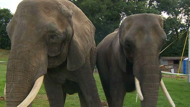 The elephants in Tregaron