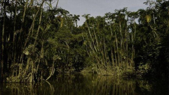 Ecuador faces vote on Yasuni park oil drilling in Amazon