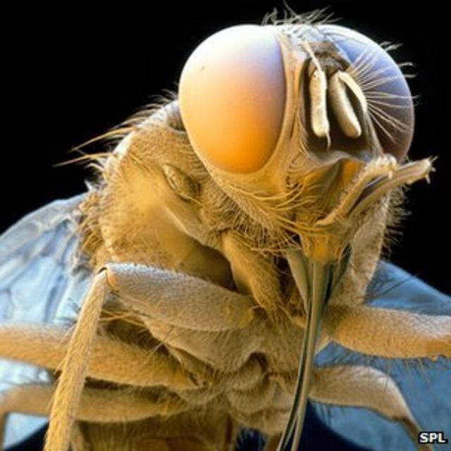 Early step in sleeping sickness cure