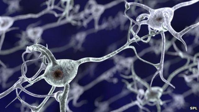 Cocaine 'rapidly changes the brain'