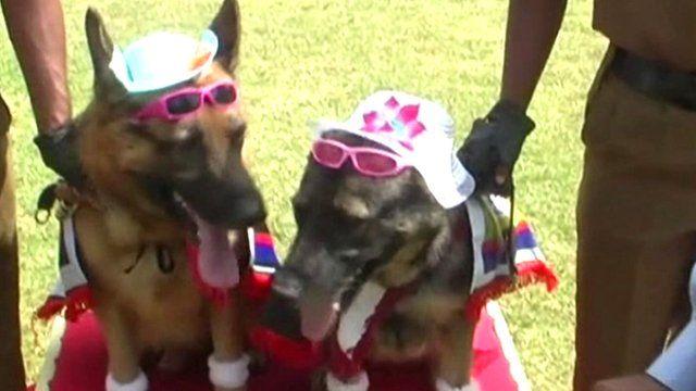 """""""Wedding"""" of police dogs in Sri Lanka"""