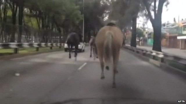 A horse running down a road behind two more horses