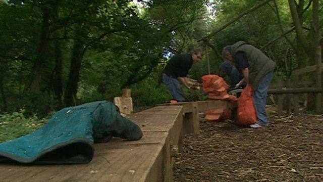 People working in woods