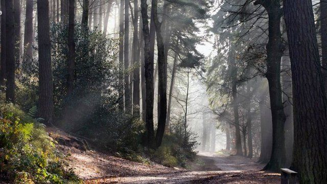 Lickey Hills Country Park (pic: Google)