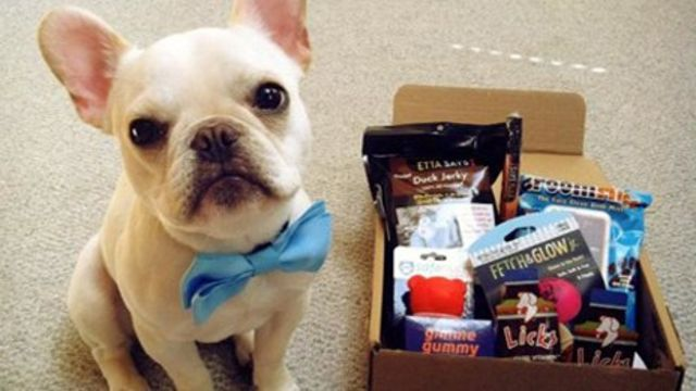 Pet projects: How US retailers are going to the dogs