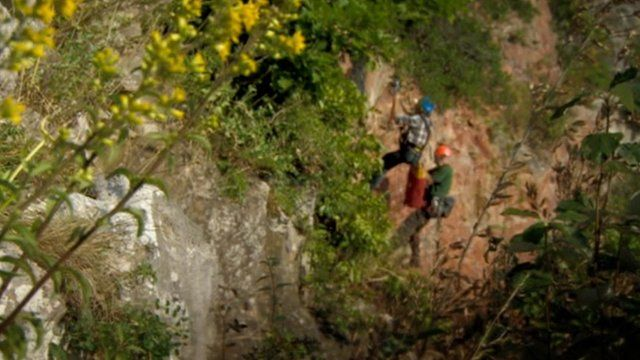 Martin Hughes-Games and Angus Tillotson explore the plants of the Avon Gorge