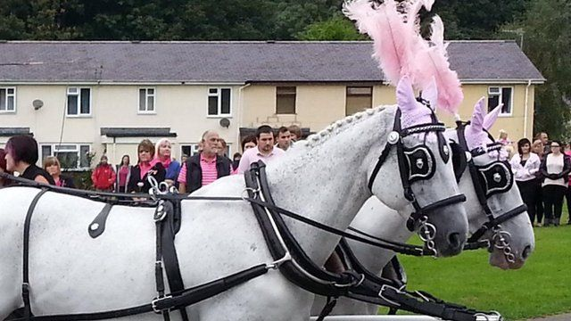 The horses had pink plumes