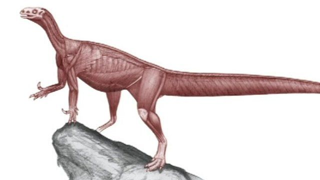 Artist's impression of Thecodontosaurus