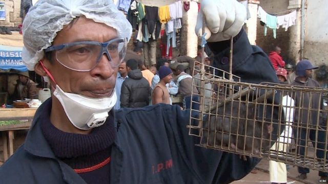 Madagascar plague: WHO in huge release of antibiotics