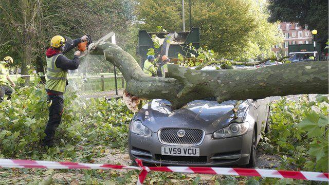 Fallen tree on a car
