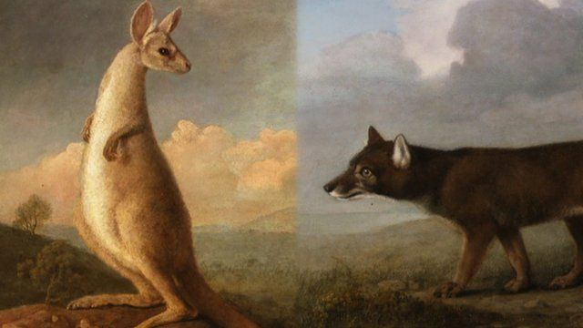 George Stubbs' Kangaroo and Dingo paintings