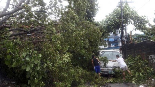 Collapsed tree crushes a car in the Philippines
