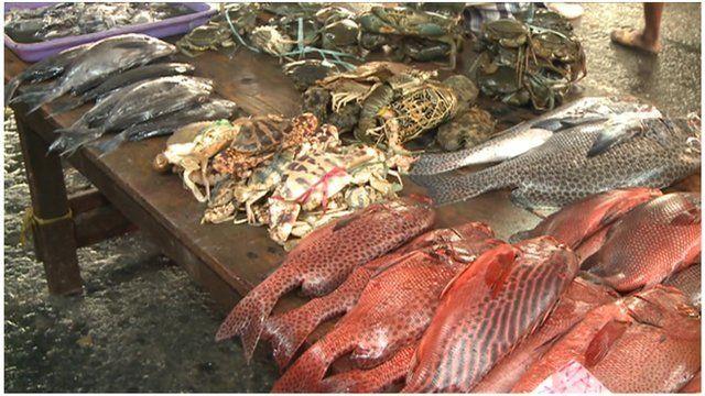 Manila fish market