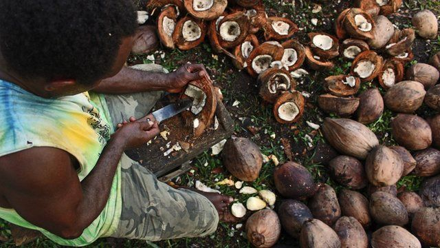 Worker cutting coconuts
