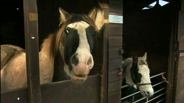 Two horses in a stable