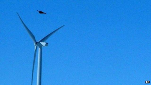 US firm Duke Energy pays out over wind farm eagle deaths