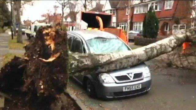 A tree crashed on a car