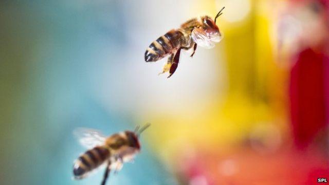 EU says pesticides may harm human brains