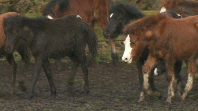 Foals in field