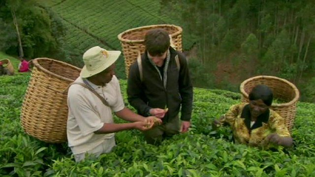 Simon Reeve tries his hand at picking tea in Kenya