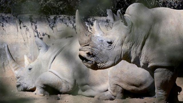 Animal trafficking: Wildlife trade crisis talks held