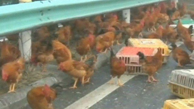Chickens run around on motorway in China
