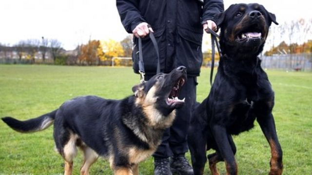 Police dogs 'attack 150 innocent people' in UK