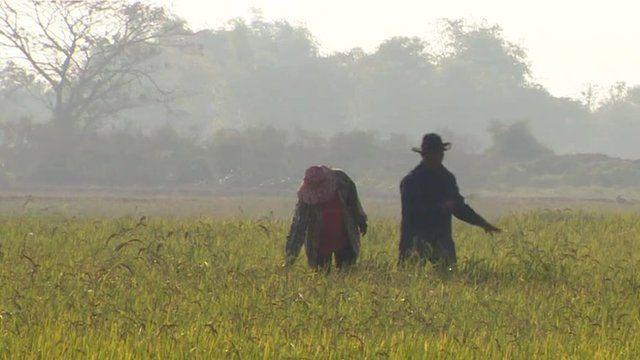 Thai farmers in field