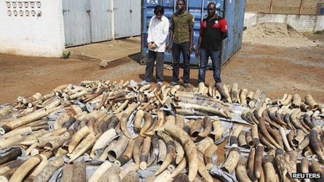 Togo police find second huge ivory haul in a week