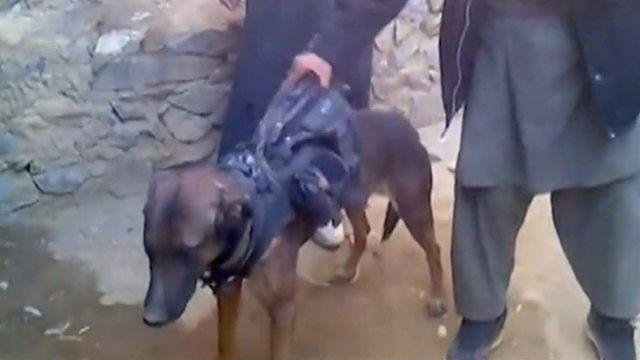 Taliban dog