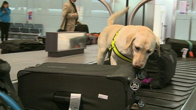 A dog on the luggage carousel