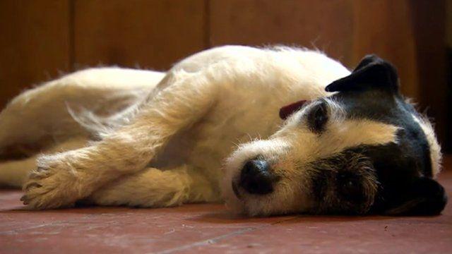 dog lying down