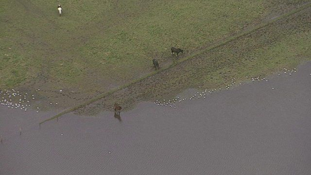 Horses in a flooded field
