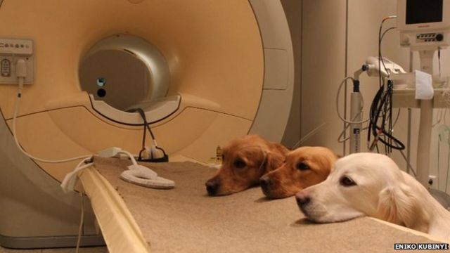 Dogs' brain scans reveal vocal responses